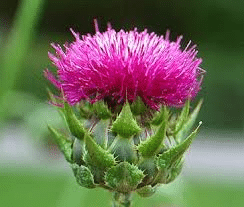 St-Marys-Thistle